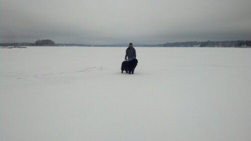 The ice is 11 inches thick this makes conneaut lake ideal for Pa ice fishing
